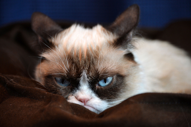 Picture of grumpy cat